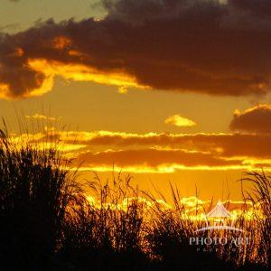 In the foreground is a beach grass silhouette, that helps to bring out the stunning golden sunset