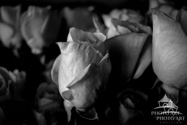 Image views a large bouquet of light-colored roses. This image is converted to black and white to