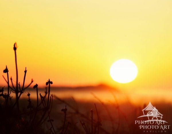 Sun Over Mist at Fire Island