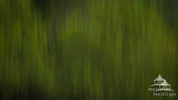 This a abstract take of new growth in the heart of The Great Smoky Mountains. Everything was just so