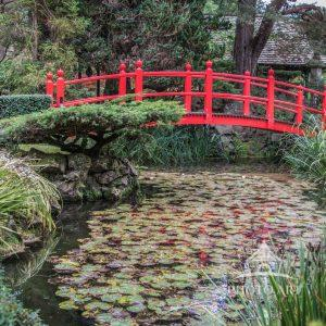 The Japanese gardens on the grounds of the Irish National Stud Farm were built upon reclaimed bog