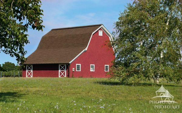 In 2007 a big red barn was the view outside of the entry to Long Island's Macari Vineyards. Today