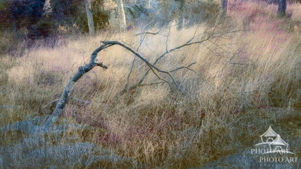 Adding life via my artistic interpretation of a fallen tree limb.
