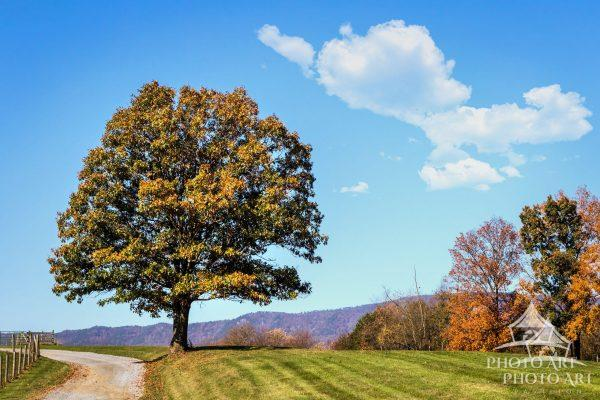 A single tree stands out along the backroads in the Shenandoah Valley in Virginia.