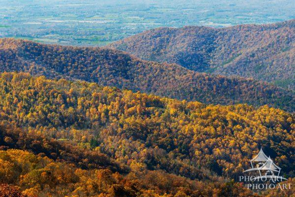 The layers of treetops in autumn cascade down to the Shenandoah Valley.