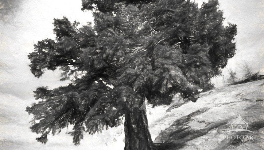A digital charcoal drawing of a lone tree that has anchored itself to the side of one of the many