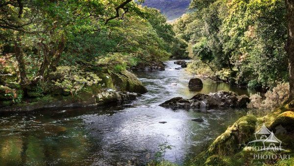 Lush, green trees and moss covered rocks border a peaceful river.