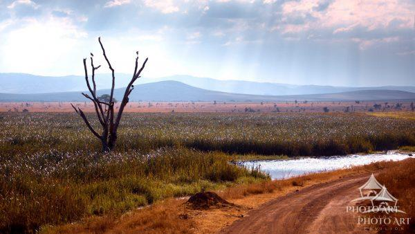 We encountered this beautiful late afternoon vista in Norther Kenya. It seems like every element in