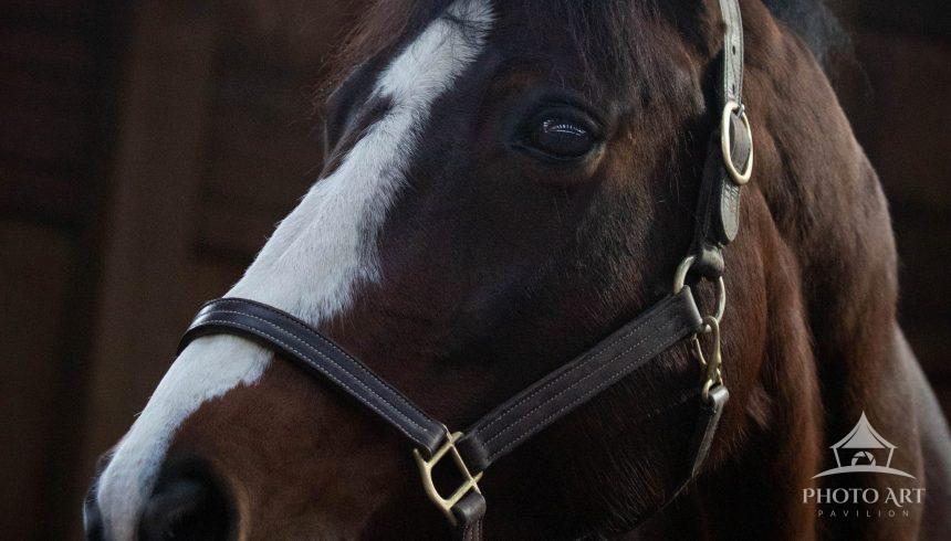 Portrait of a sweet and kind horse.
