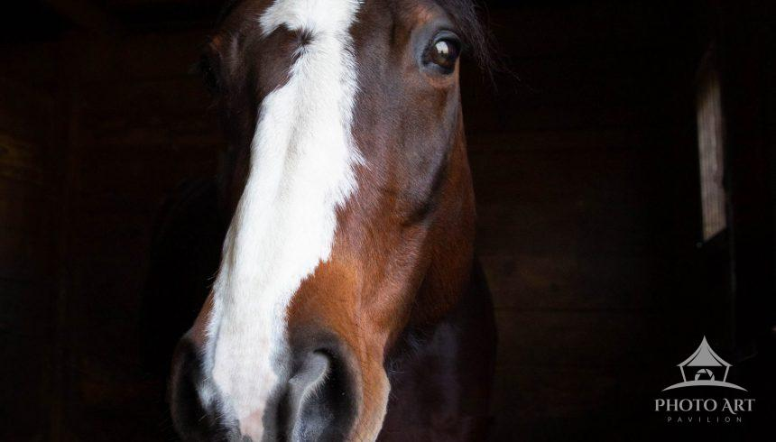 Beautiful and gentle horse photographed on Long Island.