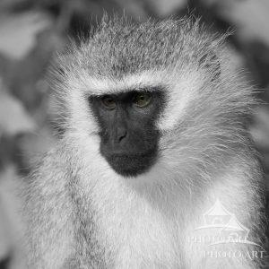 Portrait of wildlife on Samburu, Northern Kenya.  Enjoying the moment..