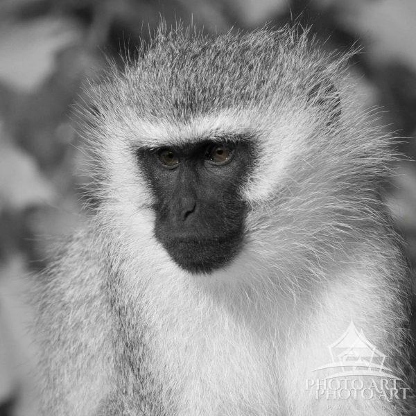 Portrait of wildlife on Samburu, Northern Kenya.  Enjoying the moment..