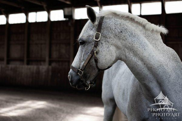 A momentary pause- this horse is a unique character, at once defiant, stubborn and loving.