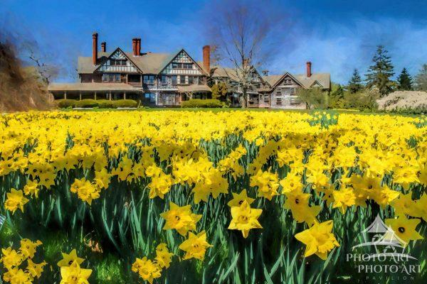 A field of daffodils seem to enjoy the bright sunshine on this beautiful Spring day at the Bayard
