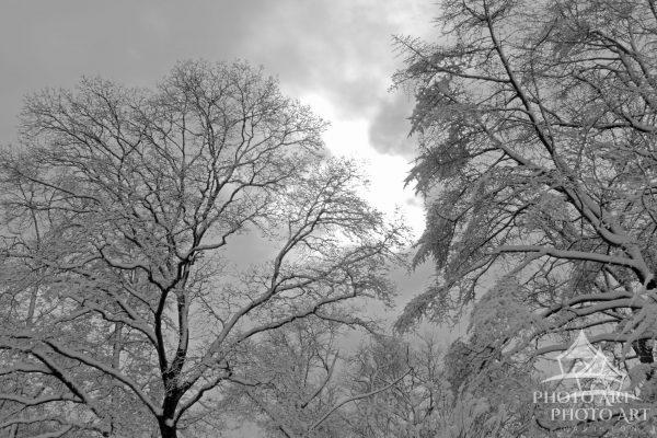 When living in a populated area, we rarely get to see the beauty of the first snow, when it is