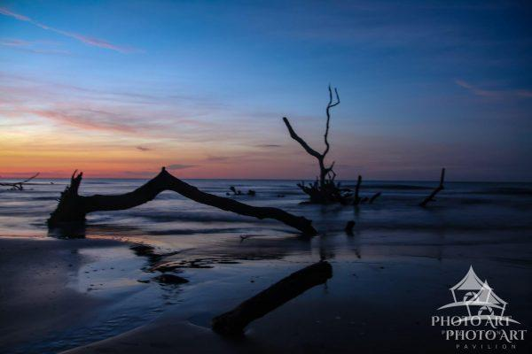 Daybreak on the beach with the trees and drift wood giving the boneyard look.
