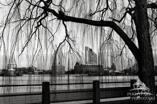 An interesting building, caught between the weeping branches of a tree, out on Roosevelt Island near
