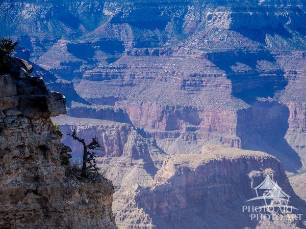A tree grows on the edge of the Grand Canyon