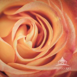 Rose spiral that looks amazing.