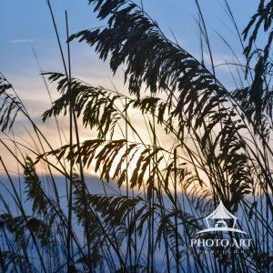 The sun shines through the beach grasses.