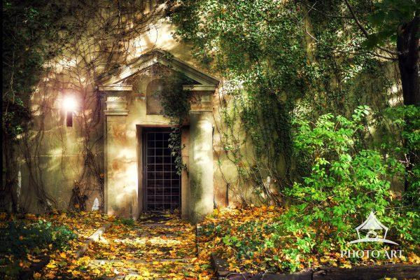 Unique building and creepy old door amongst the ivy. Color photograph.
