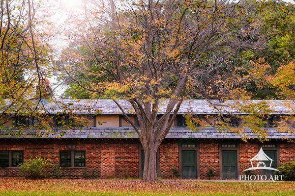 Autumn time and and beautiful tall tree in front of an old brick building. Fall scene on Long