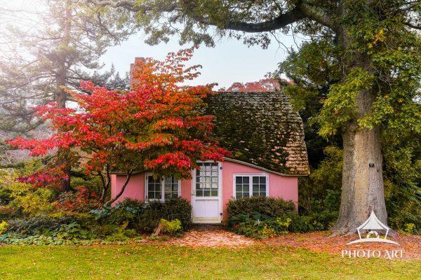 Little pink cottage under a colorful tree during autumn time. Nassau County, Long Island, NY. Color