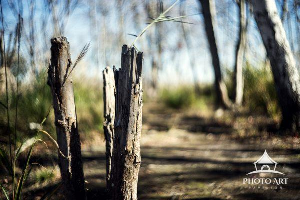 A peaceful place to walk and enjoy nature in this lovely park on Long Island in New York. Tree and
