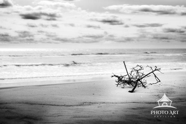 Large branch, alone on a quiet beach during the off-season on Fire Island. Black and White