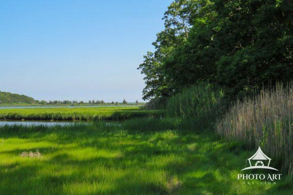 Image shows the wetlands at the end of a hike at Downs Farm Preserve.