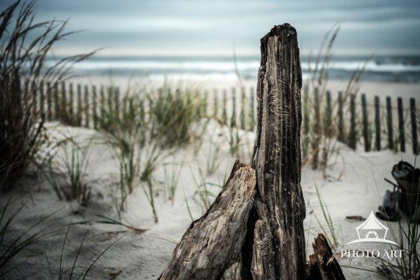Amazing driftwood along the dunes and fences near Jones Beach on Fire Island. Sandy shores and waves