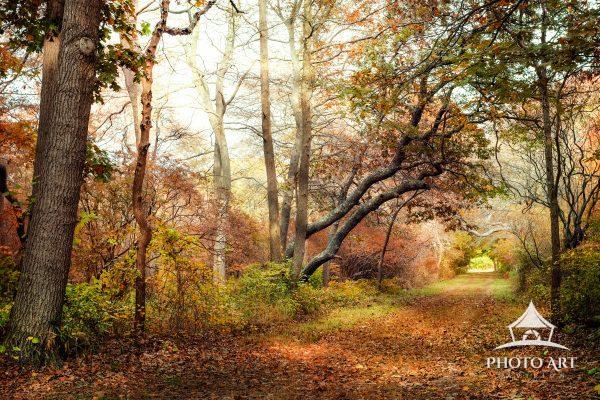 Gorgeous autumn leaves in the park, along a wide a long walking path. The fall foliage lights up the