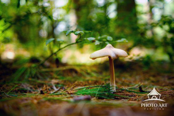 Tiny little mushroom along the floor of the forest amongst the pine needles. Enchanting and