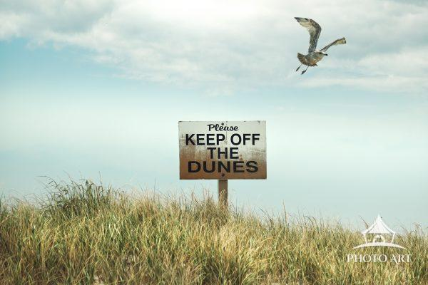 Keep off the Dunes - A sign seen in the beach grass on the dunes of Fire Island. A seagull flies