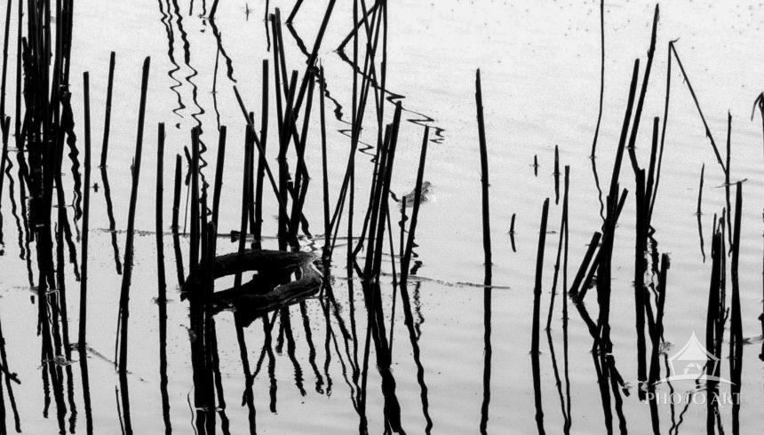 The fine reeds and their reflections turned this pond in Caumsett State Park into an abstract