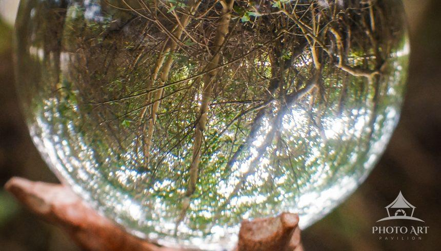 A thicket of trees is reflected through a globe.