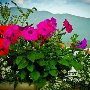 Flowers and mountains of Lake George
