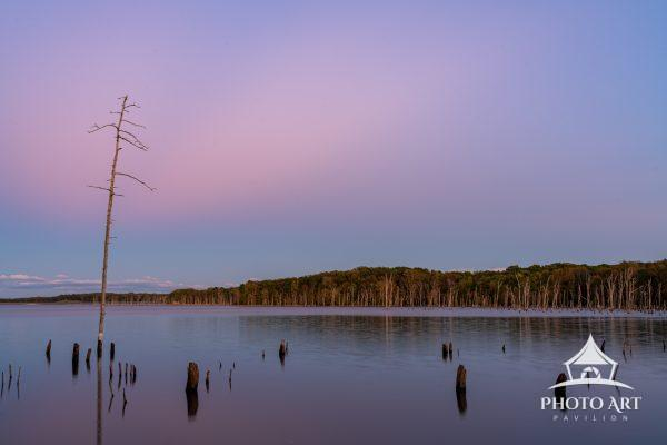 There is plenty of trees in the water in Manasquan Reservoir. This one is still standing tall