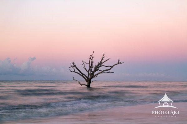 I was alone , just me and the, tree during this magical moment at Botany Bay at sunrise.