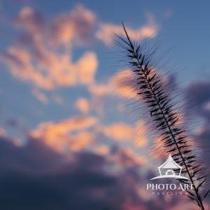Sometimes there's a need to change a viewpoint to appreciate nature's beauty.. Look to the sky