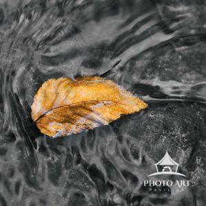 One single leaf sits stranded on a rock
