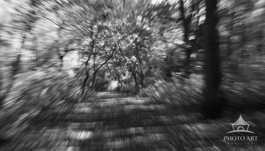 A black and white intentional camera movement capture of a trail in Massapequa Preserve