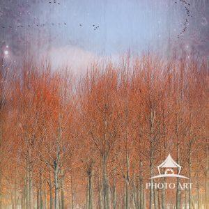 This composition combines 4 digital images to create a dream-like feel that beckons for spring to