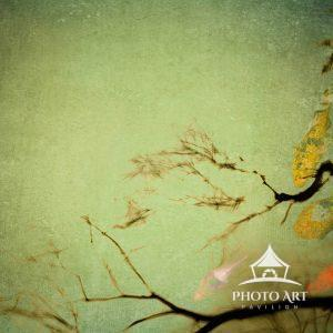 Digital painting of Japanese Koi and Cherry Tree branches
