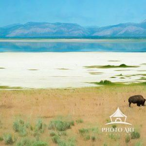 Digital painting of Bison & Mule Deer on Antelope Island, Utah