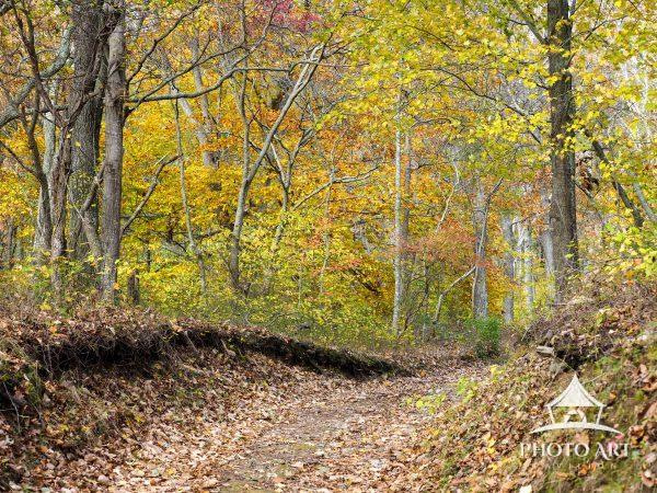 Trees in Autumn create living artistry experienced by simply hiking along a woodland trail.
