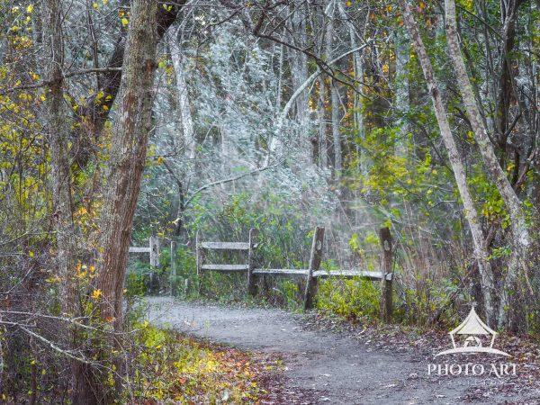 The forest trail offers an invitation to wander deeper into the woods on an autumn afternoon.