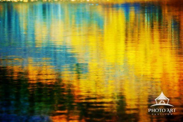 Yellow Aspens  reflected in water