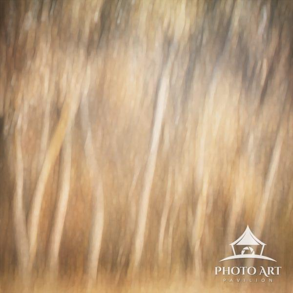 A stand of trees in golden light, panned vertically at Bosque Del Apache National Wildlife Reserve,