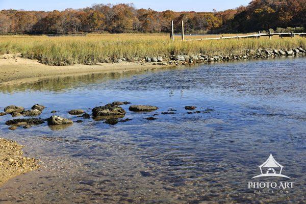 pristine marsh land